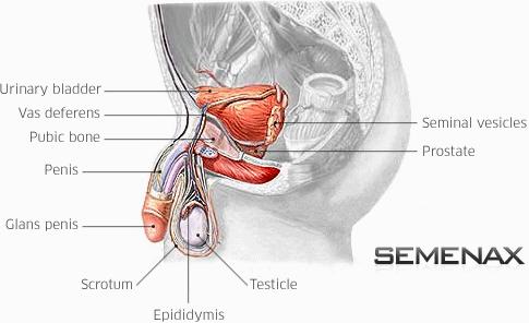 Semenax Review - Mejor macho mejora del Suplemento Comentarios